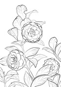 Camellia Coloring Page