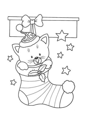 A Cute Cat in a Socking