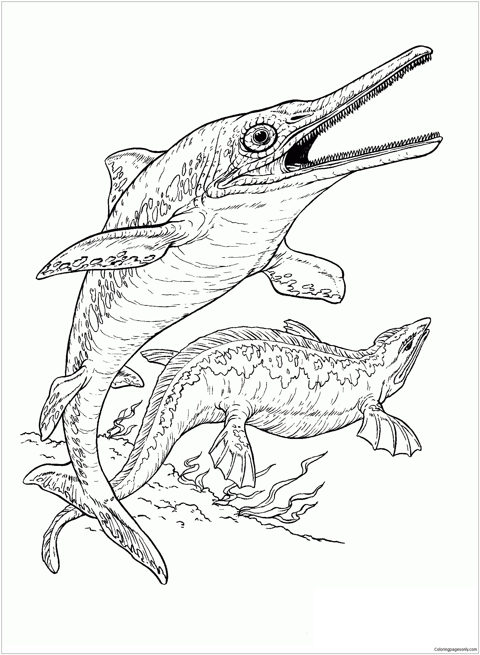 Ichthyosaur And Plesiosaur Coloring Page Free Coloring