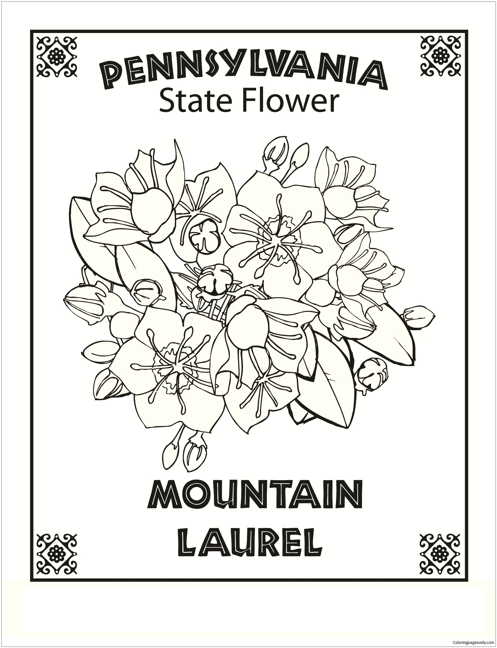 Pennsylvania State Flower Coloring