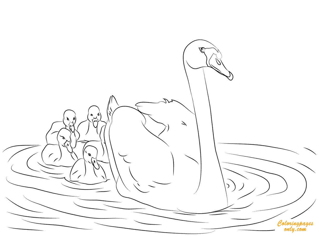 Swan And Babies Coloring Pages