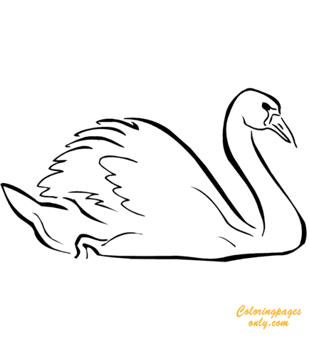Swan Sleeping Coloring Pages