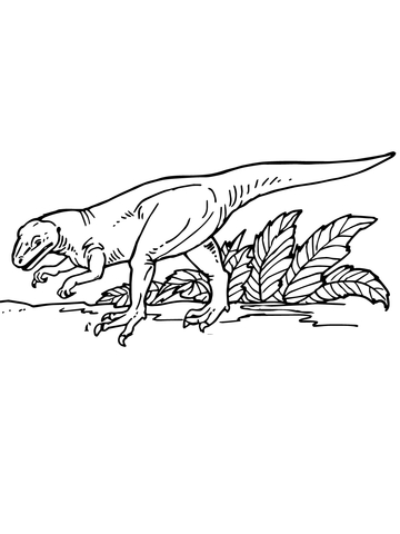 Allosaurus Carnivorous Dinosaurs Coloring Page