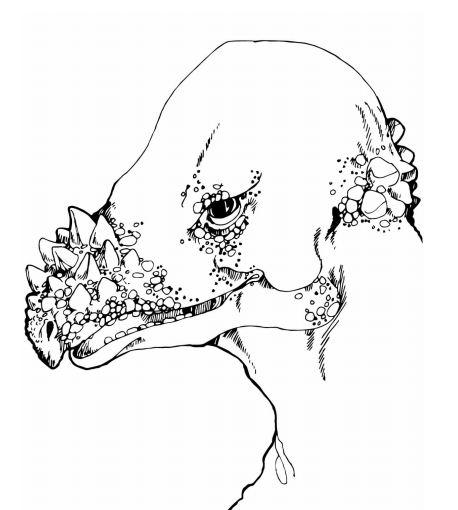 Pachycephalosaurus Head