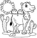 A Wild Desert Bactria Camel
