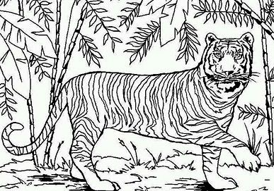 An Asian Tiger In Bamboo Forest