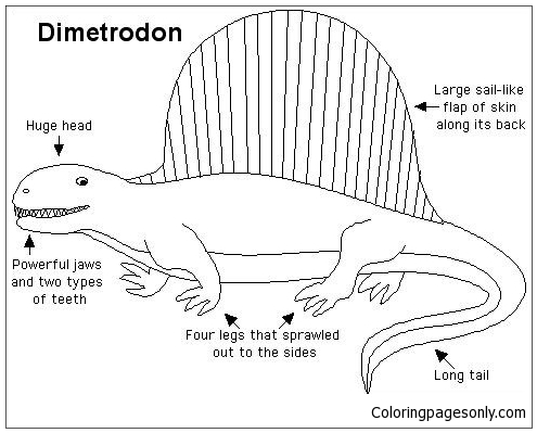 Anatomy Dimetrodon Coloring Page Free Coloring Pages Online