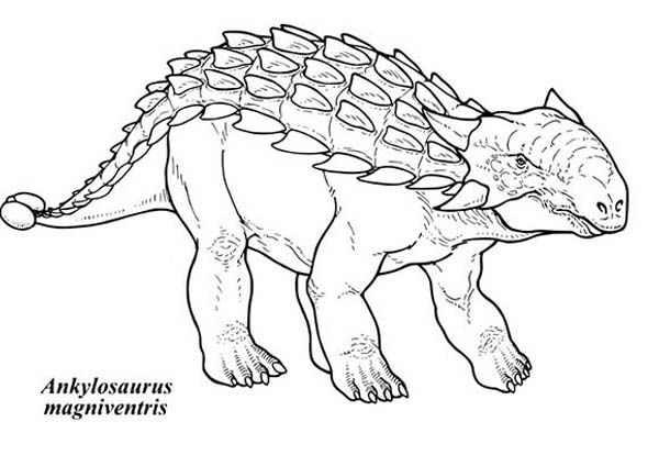 Ankylosaurus Dinosaurus Magniventris Coloring Page