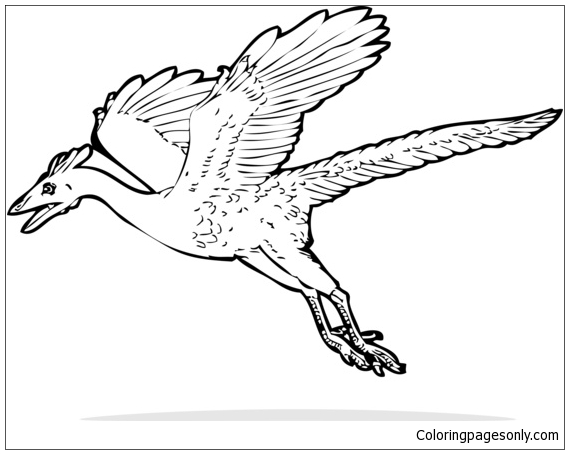 Archaeopteryx Dinosaur 2 Coloring Page Free Coloring