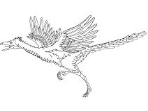 Archaeopteryx Dinosaur 5 Coloring Page