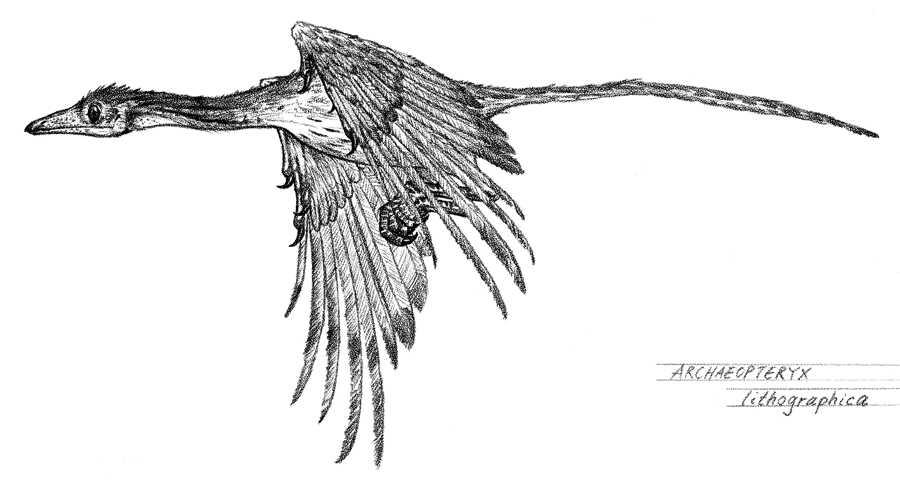 Archaeopteryx Dinosaur flies on the sky