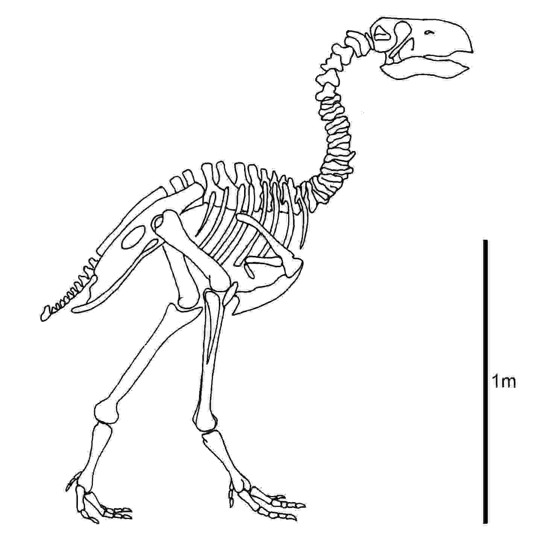 Archaeopteryx Dinosaur skeleton