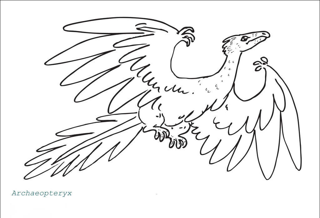 Archaeopteryx had a row of feathers on each wing