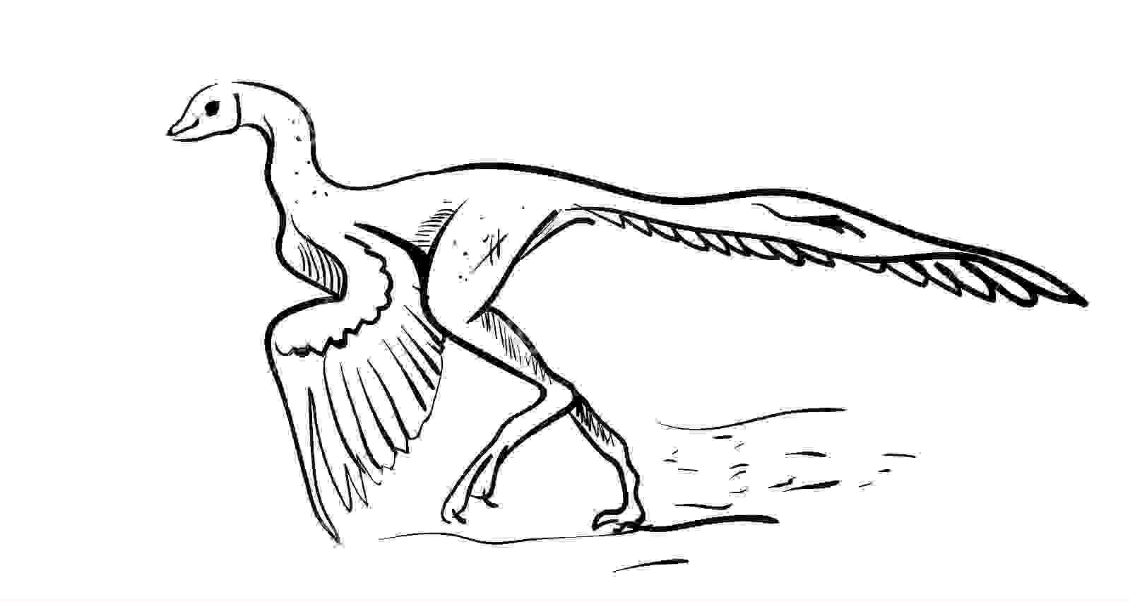 Archaeopteryx illustrator vector white background