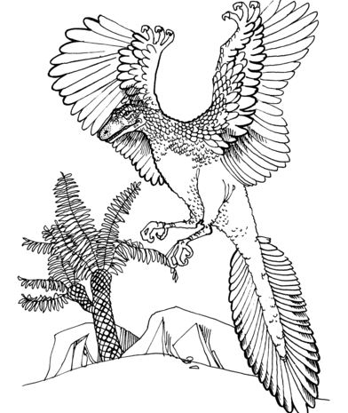 Archaeopteryx Jurassic Bird Coloring Page