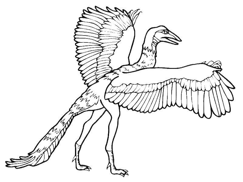 Archaeopteryx which had three fingers on each side bore claws and moved independently Coloring Page
