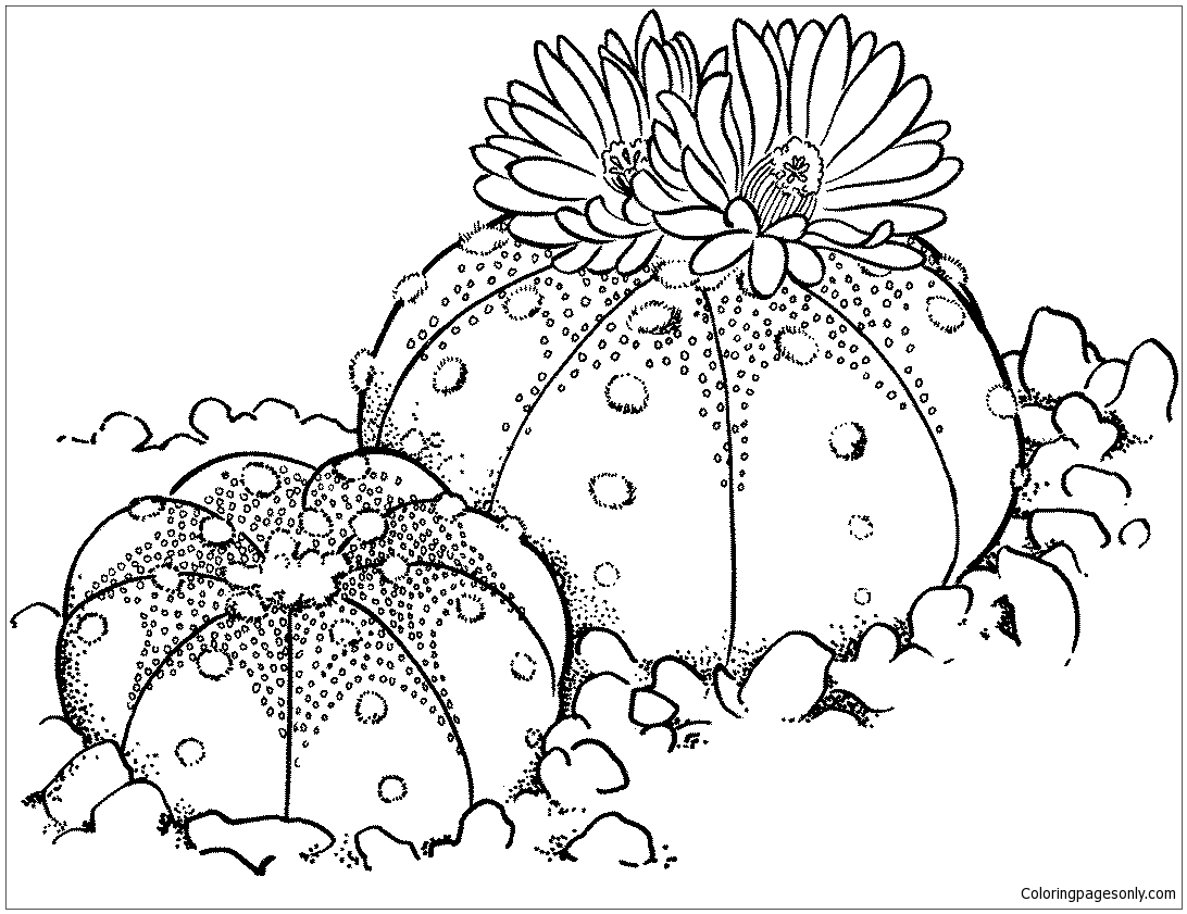 Astrophytum asterias or Sand Dollar Cactus Coloring Page - Free ...