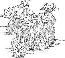 Aztekium Ritteri Cactus