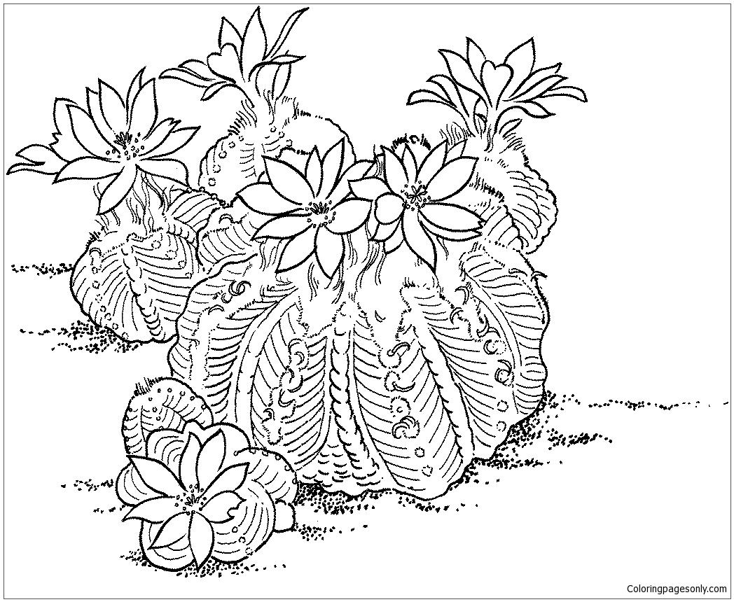Aztekium Ritteri Cactus Coloring Page