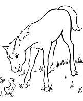 Baby Horse 2
