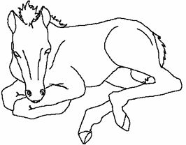 Baby Horses Cute Coloring Page