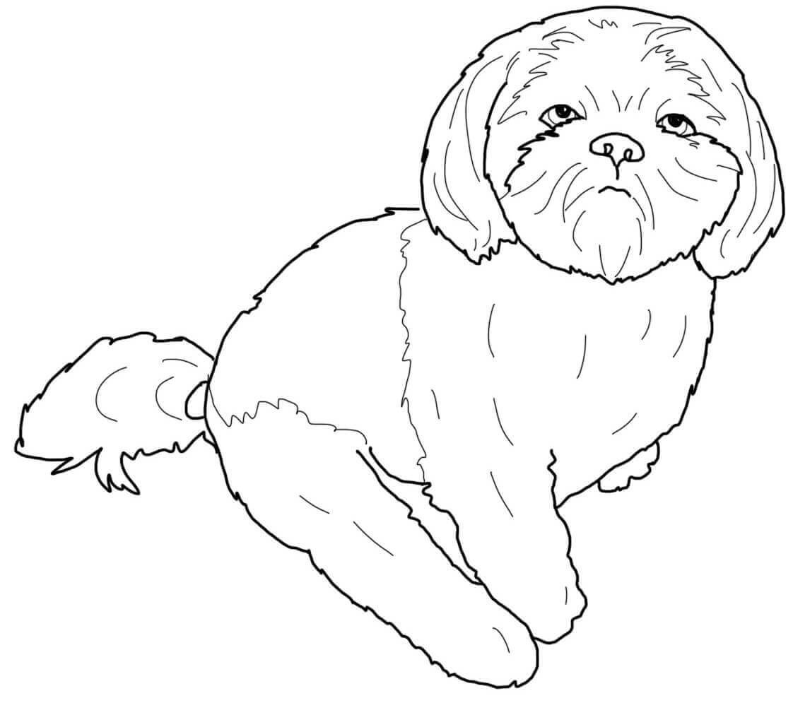 Baby Shih-tzu Coloring Page