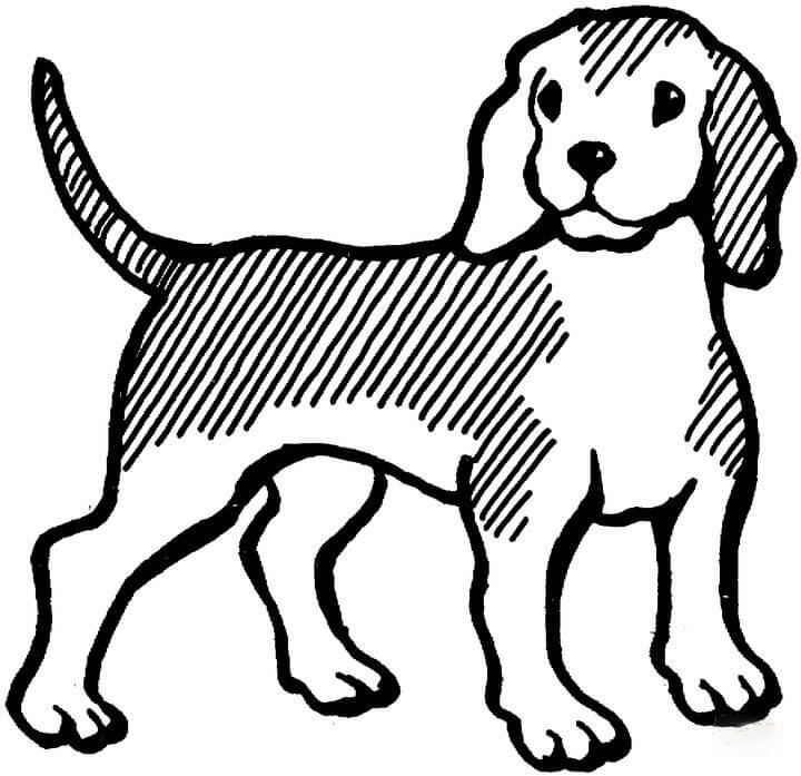 Beagle Coloring Page