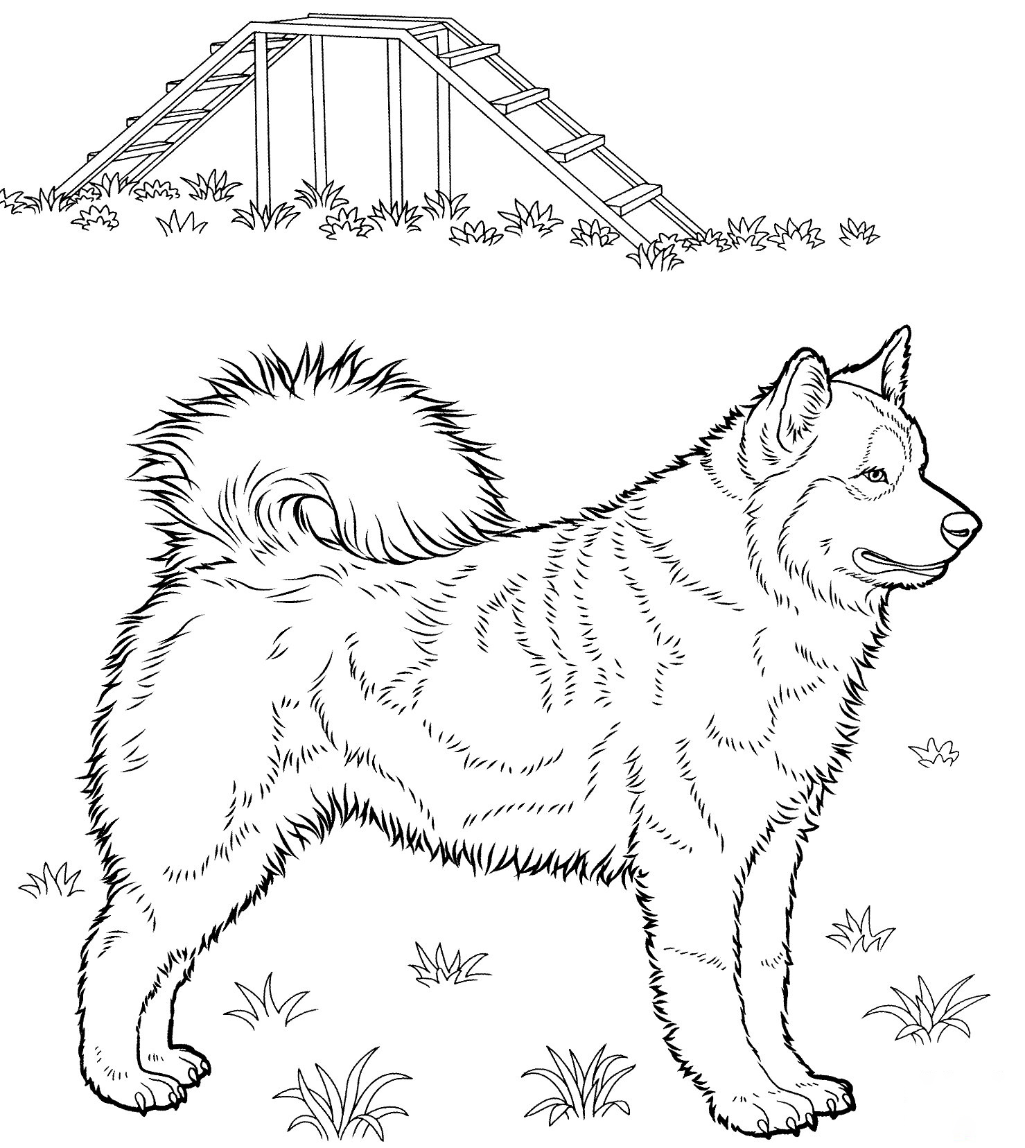 Big Husky Coloring Page