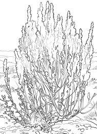 Big Sagebrush Coloring Page