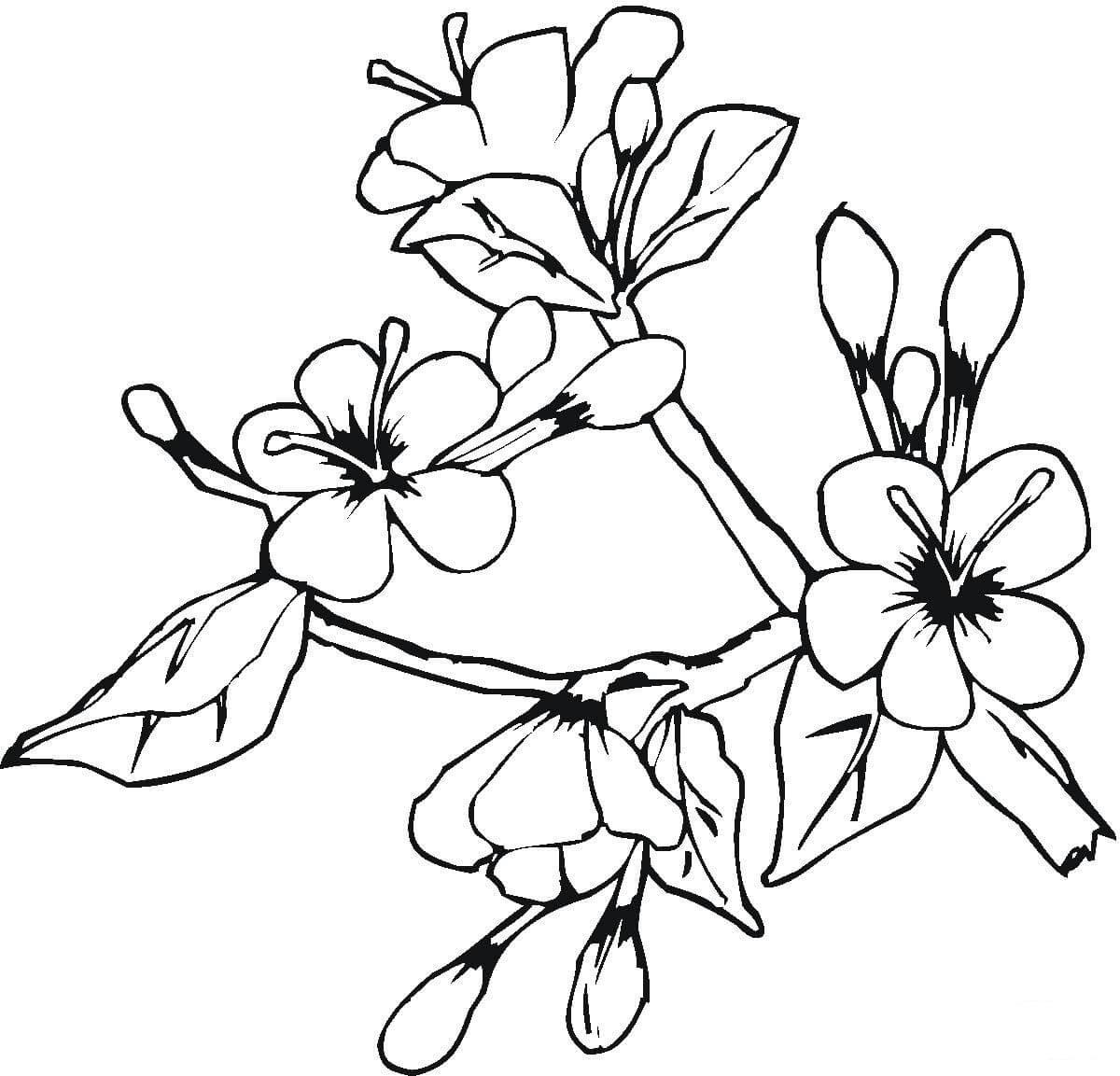 Blooming Flowers In May