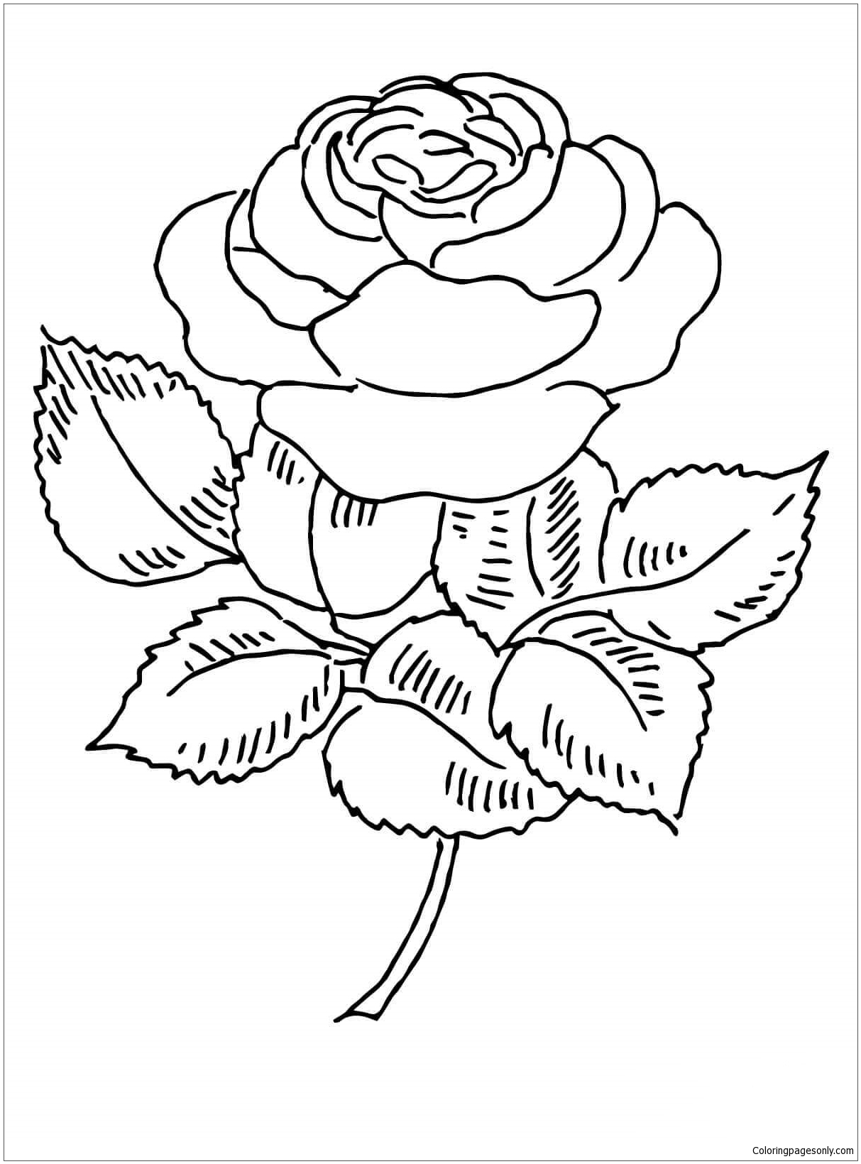 73+ Rose Coloring Pages ✨ Customize PDF Printables | 1639x1213