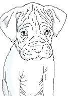 Boxer Puppy 1