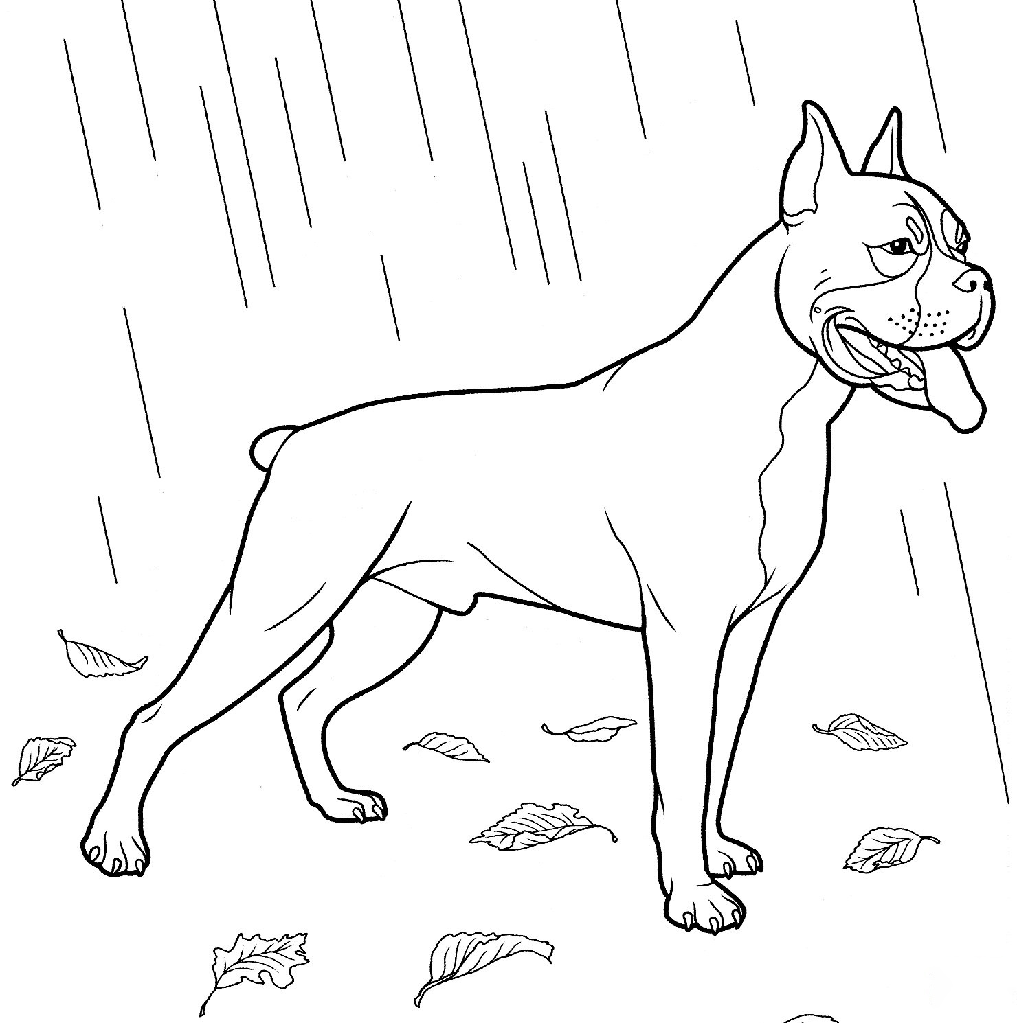 Boxer Coloring Page