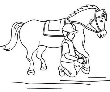 Boy Cleaning The Legs For Horses