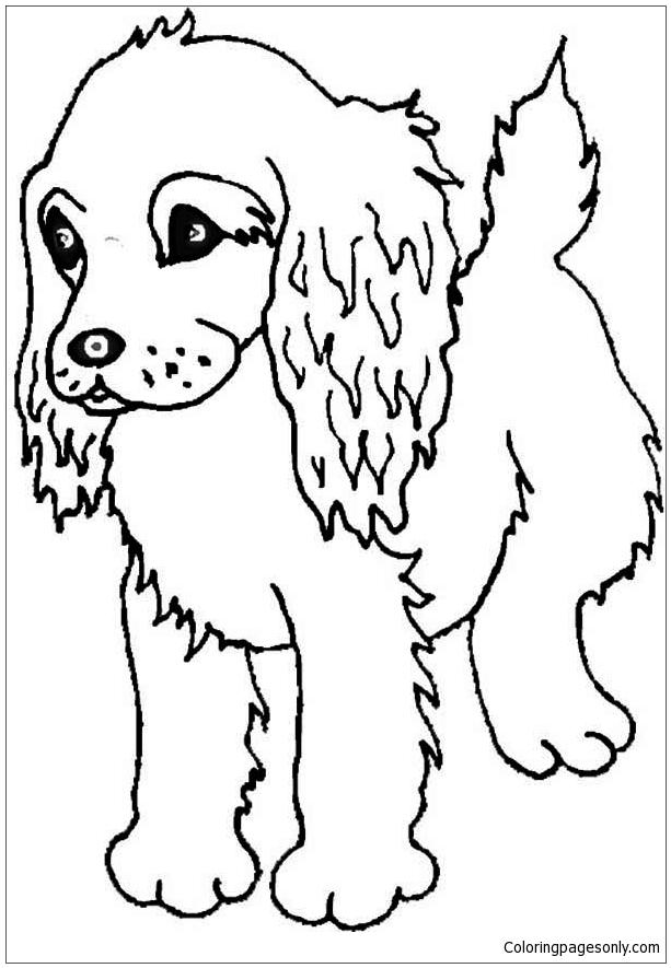 Boykin Spaniel Puppy Coloring Page