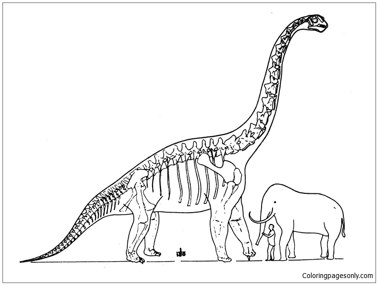 Brachiosaurus And Elephant Coloring Page