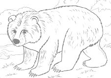 Brown Bear Coloring Page