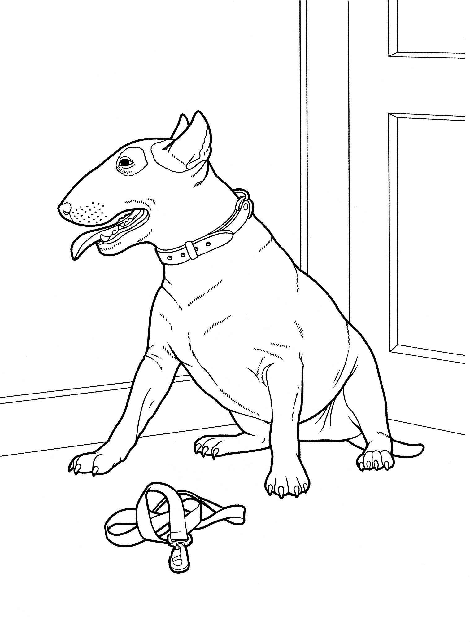 Bull Terrier Coloring Page