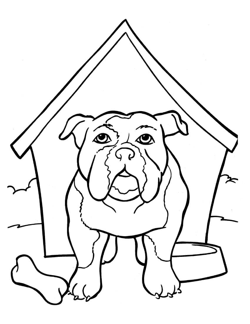 Bulldog is in the kennel Coloring Page