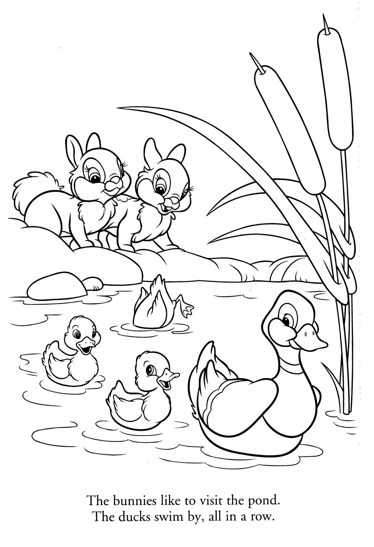 Bunnies And Ducks