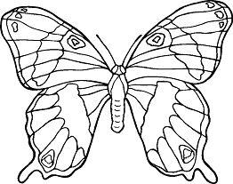 Butterfly Mandala 3