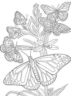 Butterfly Mandala 5 Coloring Page