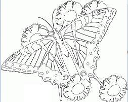 Butterfly Mandala 6