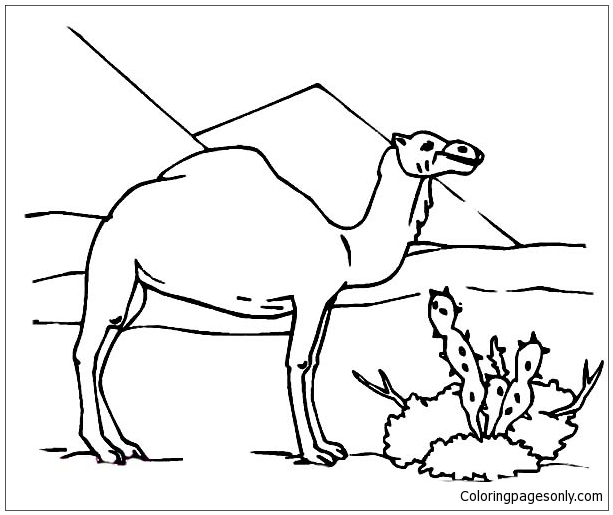 Camel And Cactus Coloring Page