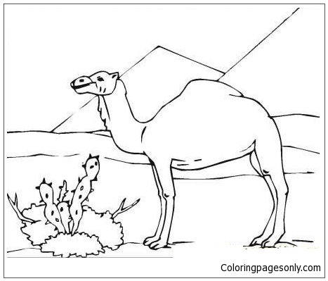 Camel In Desert Coloring Page
