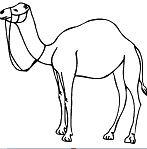 Camel Outline Clip Art