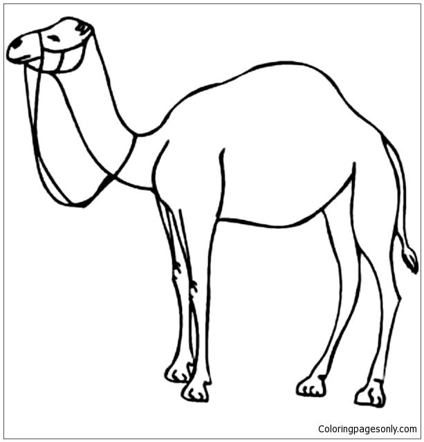 Camel Outline Clip Art Coloring Page