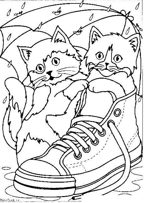 Cats In A Sneaker