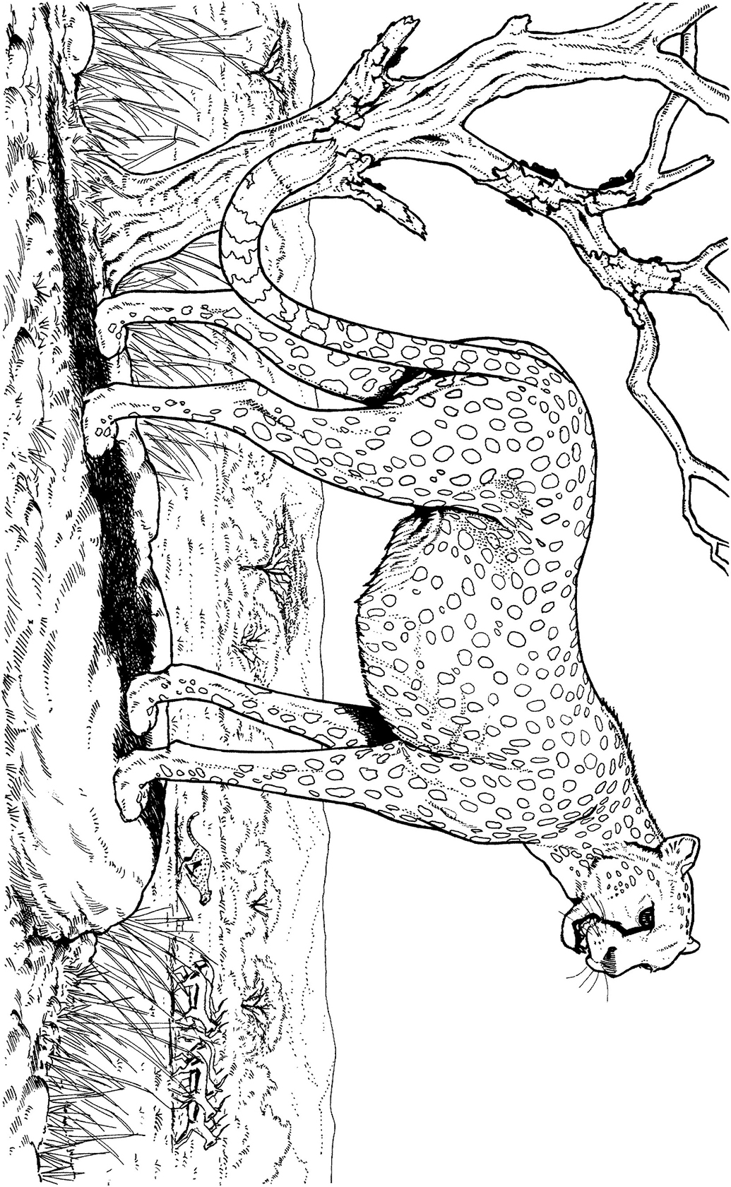 Pegasus Winged Horse Coloring Page Free Coloring Pages