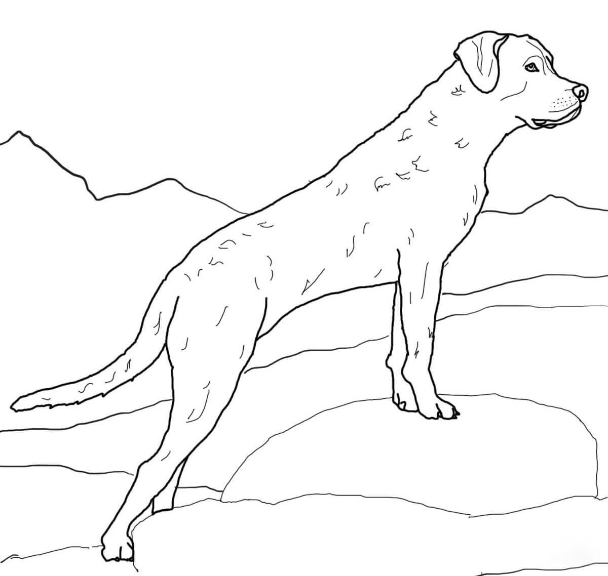 Chesapeake-bay Coloring Page